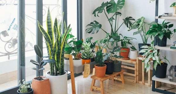 Jardim em casa   Conheça o livro com as melhores dicas de jardinagem